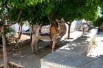Donkey in Hydra, Greece
