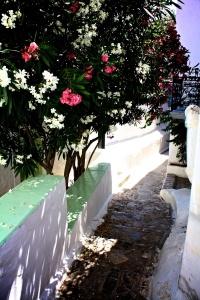 Flowers on Hydra, Greece